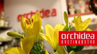Orchidea kvetinárstvo